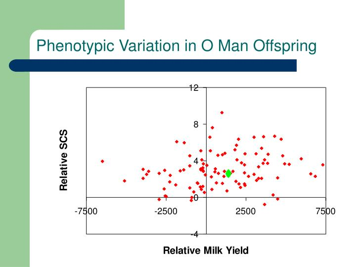 Phenotypic Variation in O Man Offspring
