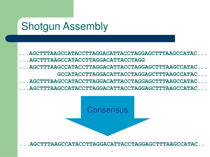 Shotgun Assembly