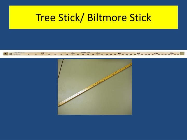 Tree Stick/ Biltmore Stick