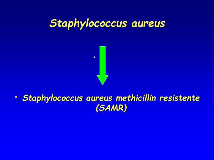 Staphylococcus aureus1