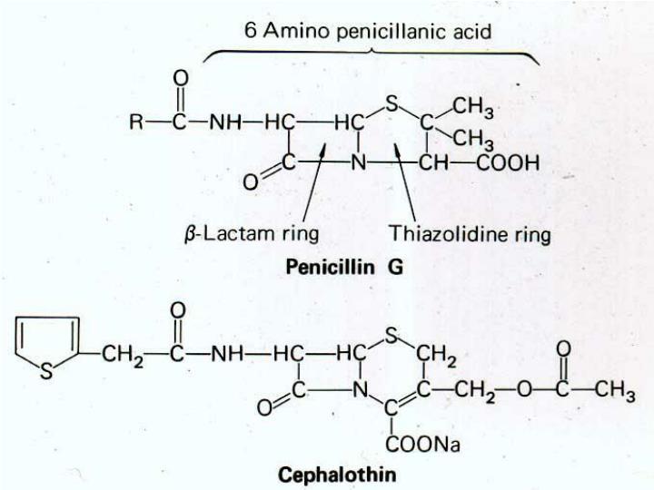 Beta lactam antibiotics cephalosporins