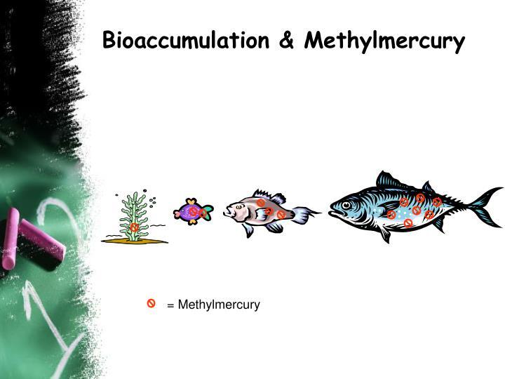 Bioaccumulation & Methylmercury