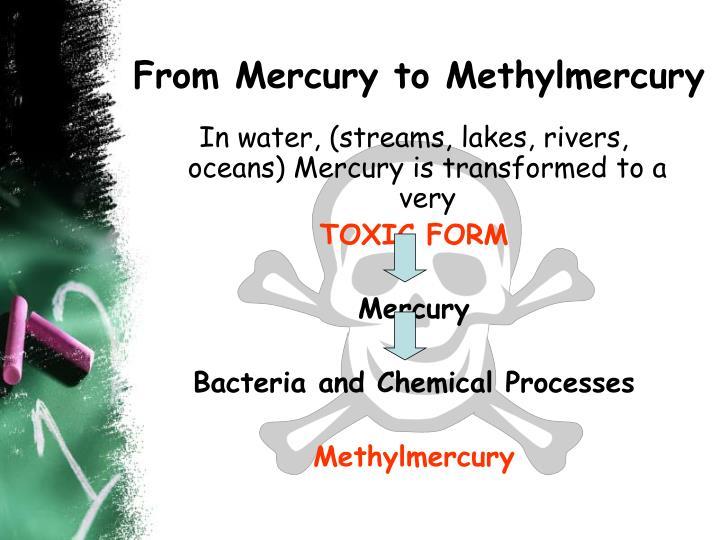 From Mercury to Methylmercury