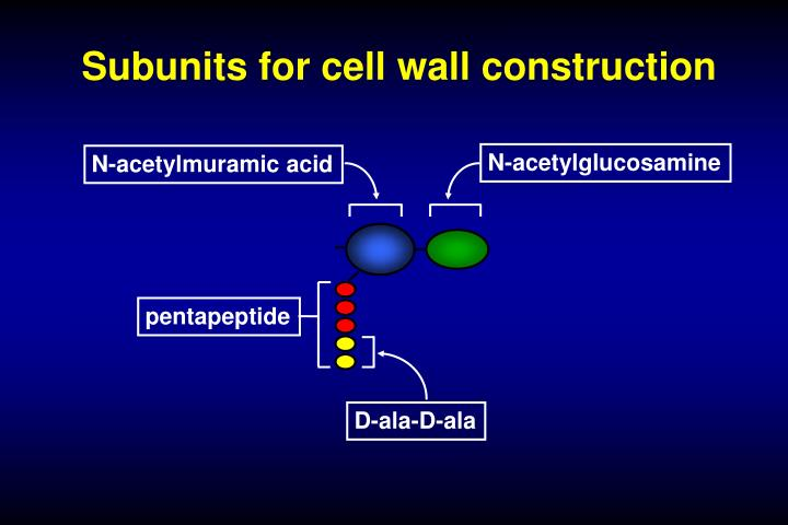 Subunits for cell wall construction