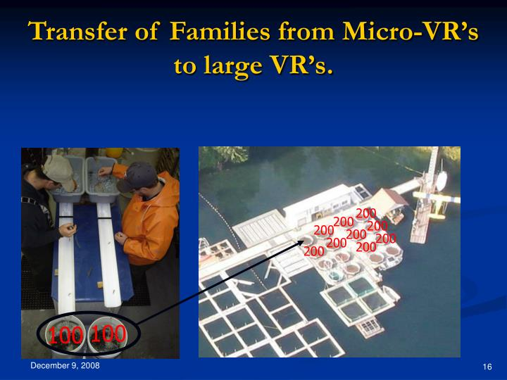 Transfer of Families from Micro-VR's to large VR's.