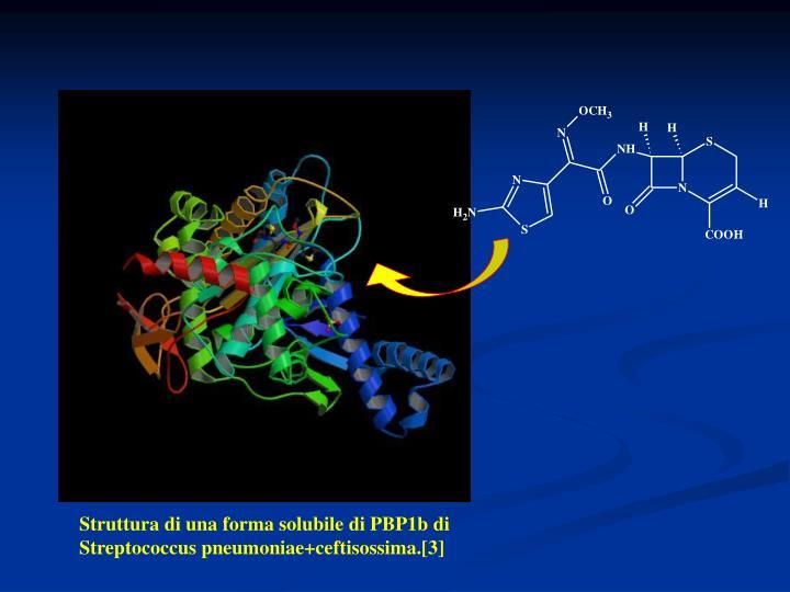 Struttura di una forma solubile di PBP1b di Streptococcus pneumoniae+ceftisossima.[3]