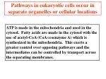 pathways in eukaryotic cells occur in separate organelles or cellular locations