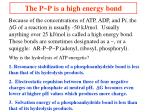 the p p is a high energy bond