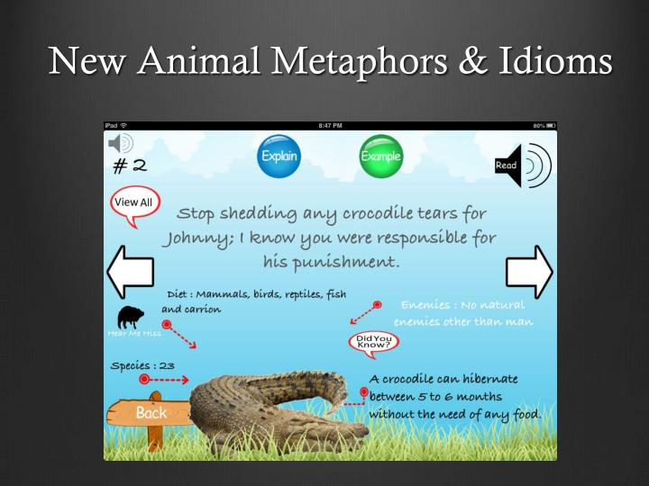 New Animal Metaphors & Idioms