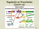 regulaci n en procariontes oper n lac