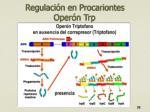 regulaci n en procariontes oper n trp