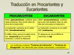 traducci n en procariontes y eucariontes