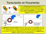 transcripci n en procariontes