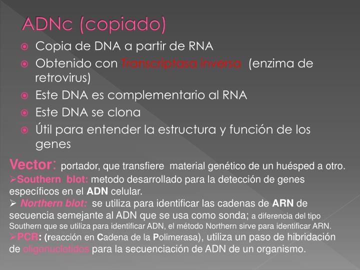 ADNc (copiado)
