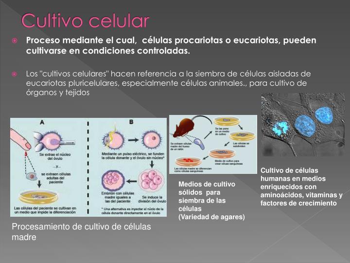 Cultivo celular