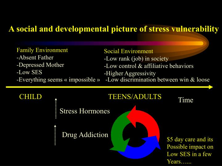 A social and developmental picture of stress vulnerability