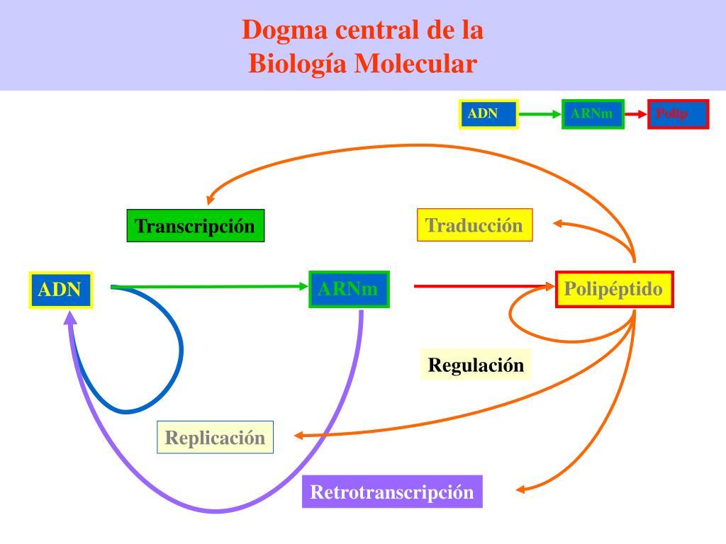 Ppt Mecanismo De Replicacion Y Funcion Del Adn Powerpoint