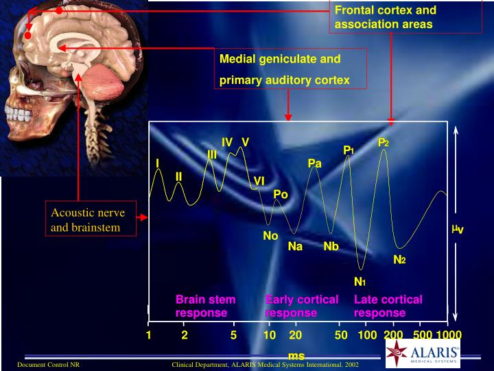 Frontal cortex and