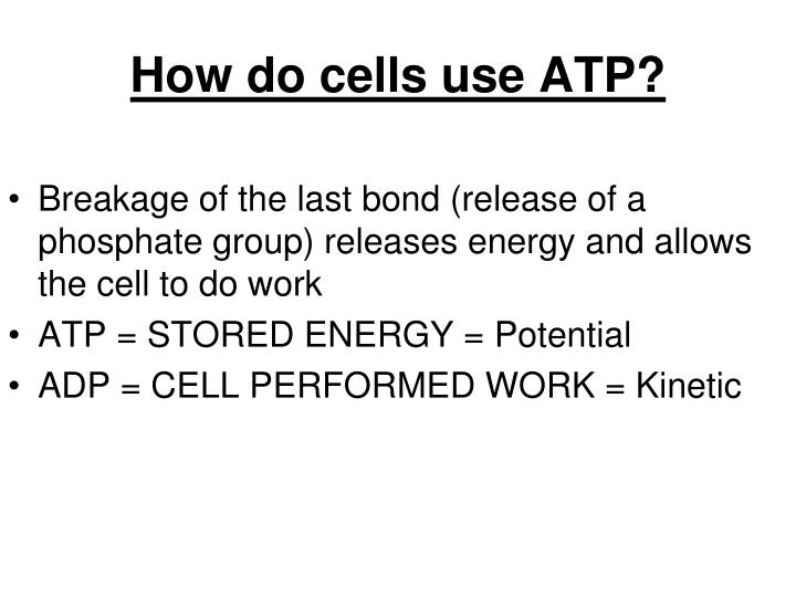 How do cells use ATP?
