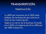 transcripci n5