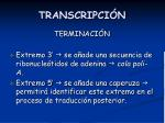 transcripci n7