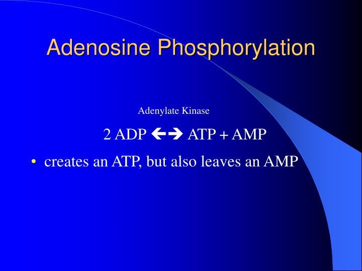 Adenosine Phosphorylation