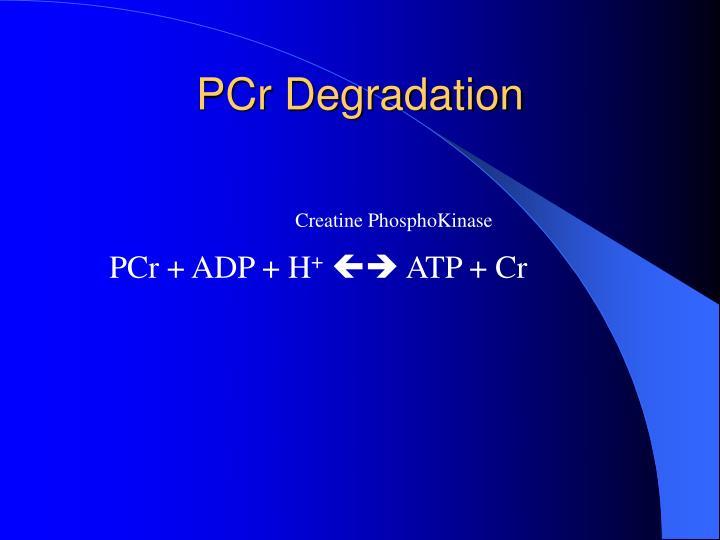 PCr Degradation