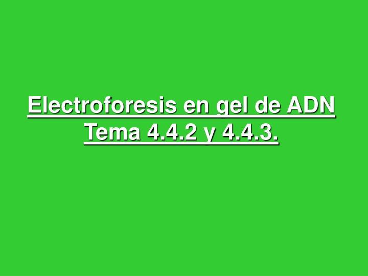 electroforesis en gel de adn tema 4 4 2 y 4 4 3 n.