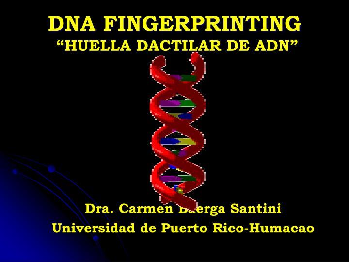 dna fingerprinting huella dactilar de adn n.