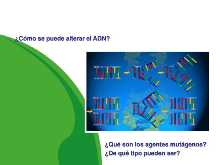 ¿Cómo se puede alterar el ADN?