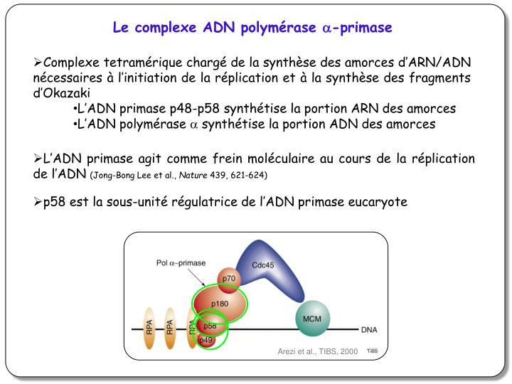 Le complexe ADN polymérase