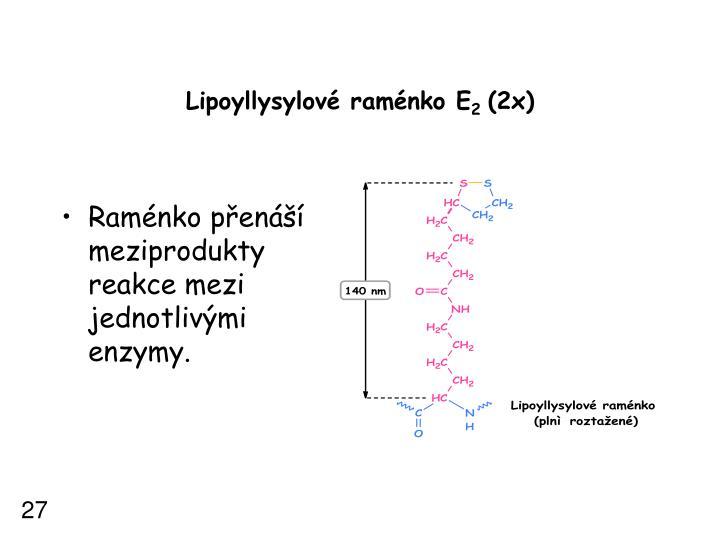 Lipoyllysylové raménko E