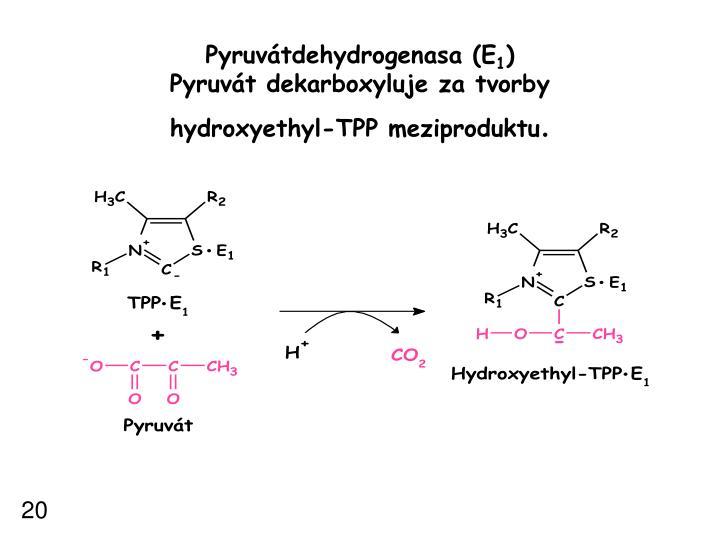 Pyruvátdehydrogenasa (E