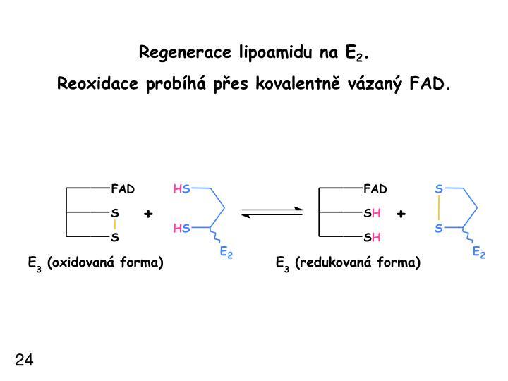 Regenerace lipoamidu na E