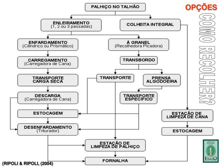 (RIPOLI & RIPOLI, (2004)