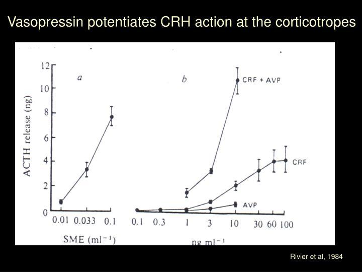 Vasopressin potentiates CRH action at the corticotropes