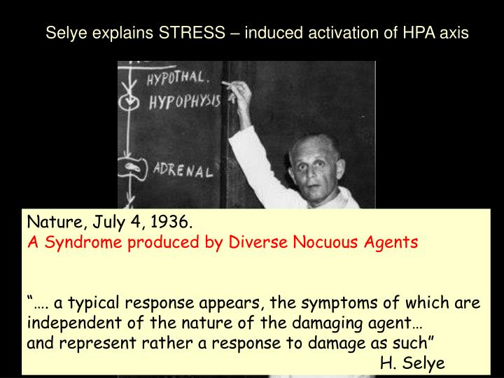 Selye explains STRESS – induced activation of HPA axis