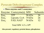 pyruvate dehydrogenase complex1