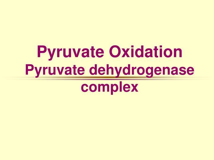 pyruvate oxidation pyruvate dehydrogenase complex n.