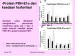 protein pdh e1 dan keadaan fosforilasi