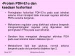 protein pdh e1 dan keadaan fosforilasi1