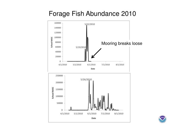 Forage Fish Abundance 2010