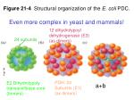 figure 21 4 structural organization of the e coli pdc