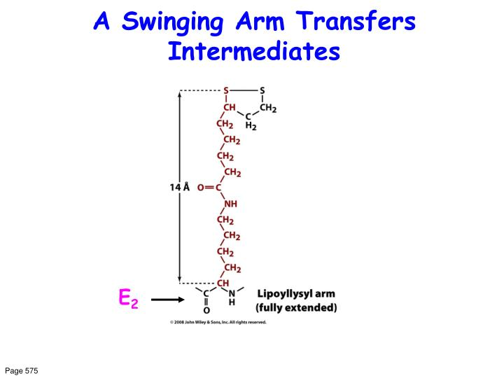 A Swinging Arm Transfers Intermediates