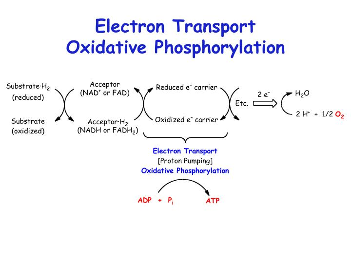 Electron Transport