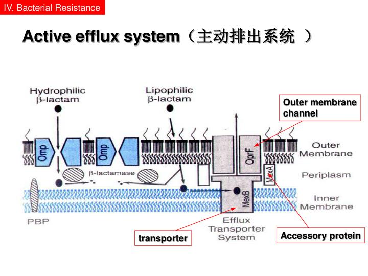 Active efflux system