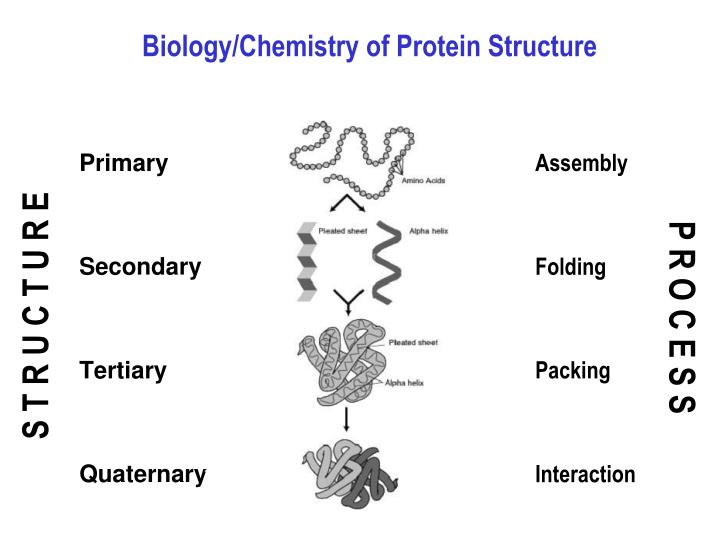 Biology chemistry of protein structure