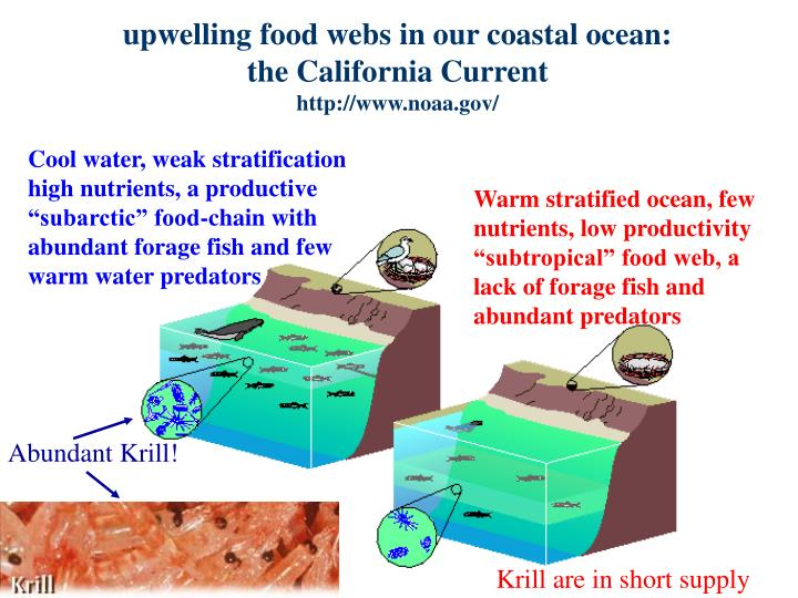 upwelling food webs in our coastal ocean: the California Current