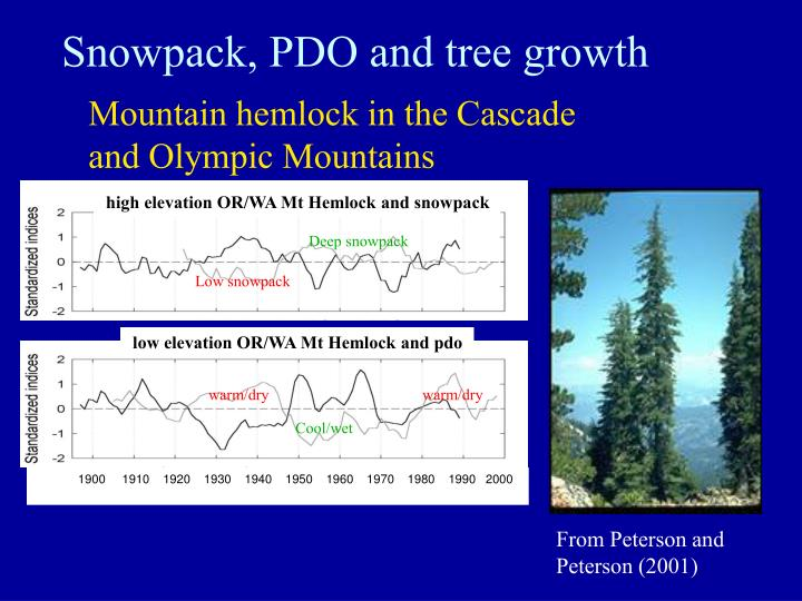 Snowpack, PDO and tree growth