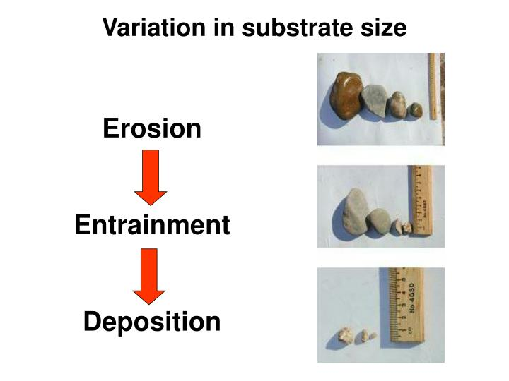 Variation in substrate size